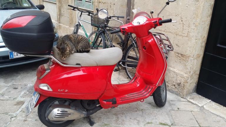 Lecce, hej kotku